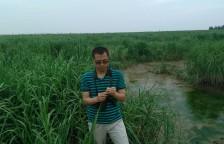 在福建省闽江河口湿地,陈立伟拿着一株互花米草,这种草属于入侵物种,对中国的湿地构成威胁