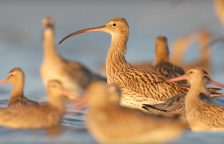 New Hope for Chinas Endangered Migratory Birds