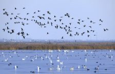 Chinas Coastal Wetlands Get a Second Chance Web