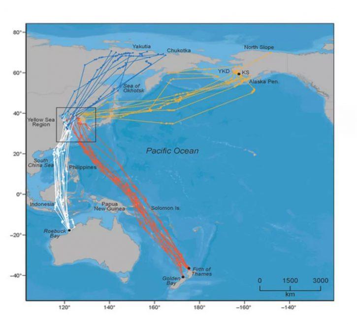 资料来源: 东亚—澳大利西亚迁飞区伙伴关系