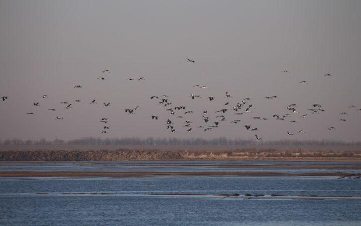 天津北大港湿地位于北京东南部150公里处,总面积34887公顷。( 照片来源:北京师范大学)
