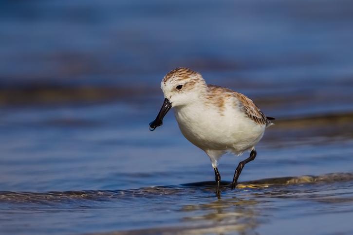 thumbnail image for 祝贺!中国首个滨海湿地世界自然遗产